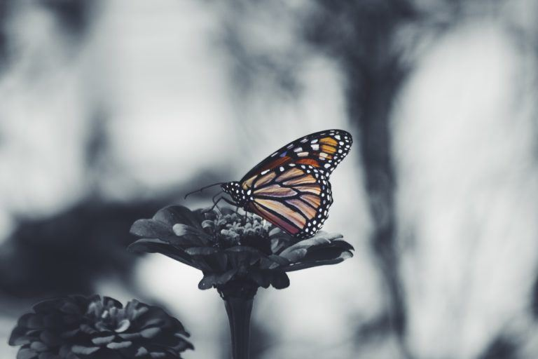 Photograph of a butterfly on a flower.