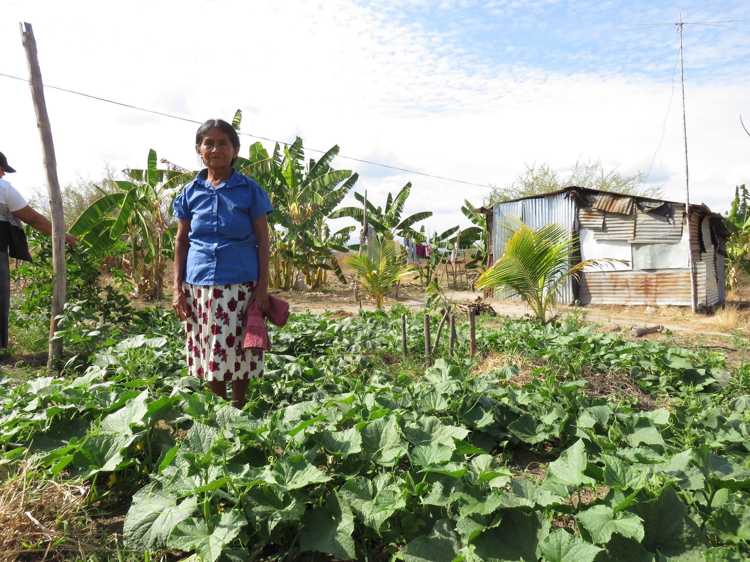 Maria Antonia, an older ESPERA woman living in El Salvador, stands in a field of cabbage in front of her home.